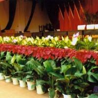 杭州萧山会场鲜花布置,会议背景搭建