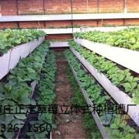 正定草莓立体式种植槽13032671560