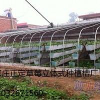 石家庄正定供应草莓立体种植槽13032671560