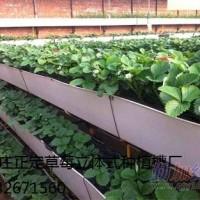 正定供应草莓种植槽,草莓育苗槽13032671560
