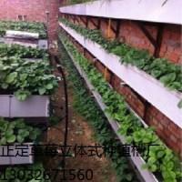 最大草莓种植园在用正定立体种植槽