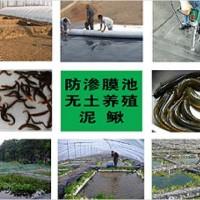 莲藕种植布 泥鳅黄鳝等水产养殖专用布