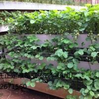 草莓大会专用草莓立体种植槽13032671560