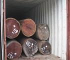 盐田港代理榉木木材进口手续/原木进口代理
