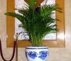 北京绿植租赁,绿植租摆公司