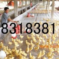 0.5米-2.5米宽塑料平网,塑料养殖网批发,塑料网供应
