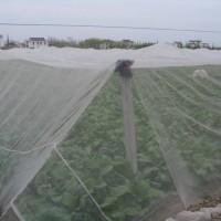 厂家批发编织塑料网