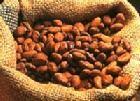 上海大美木豆,可乐豆,风车木进口清关代理