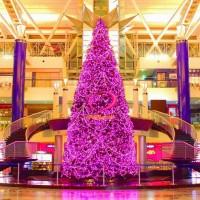 圣诞树  LED串灯  花卉
