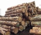 广州木材进口报关公司-南美橡胶木进口清关代理