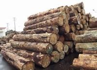 广州木材进口报关