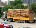 蛇口港进口木材/木方报关如何避免商检查货发生/保证金的作用