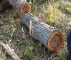 东莞 越南原木进口清关费用|柬埔寨木材进口代理报关