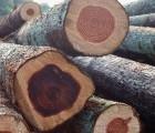 东莞 美国樱桃进口代理报关代理|黄埔港木材进口清关公司