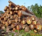 东莞十余年的服务精神-非洲红木进口报关-扬航国际报关行