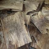 长期供应沉香树移植移栽     长期供应白木香树苗移植移栽