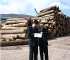 办理橡胶木木材进口清关/印度木材进口代理手续