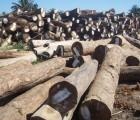 进口橡胶木木材代理报关报检/进口老挝木材通关单