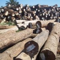 进口橡胶木木材代理报关进口老挝木材