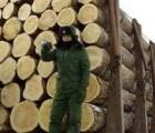 上海市洋山港橡胶木进口报关公司