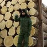 上海市洋山港橡胶木进口报关代理