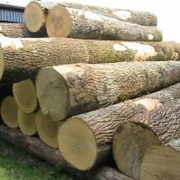 木材进口单证木材进口流程木材进口资料