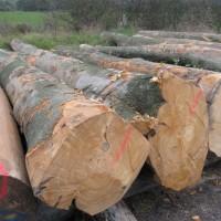 木材进口代理木材进口资料木材进口流程