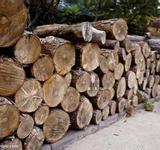 上海市上海木材进口报关/上海红木进口报关/上海原木进口报关