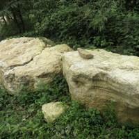 龟纹石、景石、龟纹石