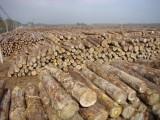 木材进口报关清关需要如何处理