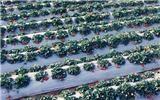 山东省超低价的白地膜生产基地