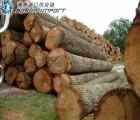 榉木原木进口报关 代理 清关 流程 费用 手续 关税