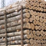 (萨米)南美洲蒺藜木原木进口报关清关 进口清关流程