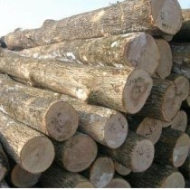 菩提木进口报关|美洲白木进口报关代理|美国3毛榉进口清关公司