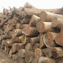 广州进口白蜡木原木报关公司,白蜡木原木进口清关代理