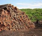 泰国橡胶木 泰国橡胶木供求 泰国橡胶木进口