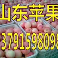 山东苹果产地山东苹果价格