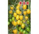 口感好耐贮运产量高小番茄种子―