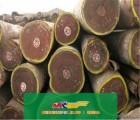 进口非洲木材清关报关报检流程步骤