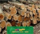 上海木材进口服务、商检报关木材代理