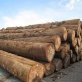 深圳进口南美洲蒺藜木烟熏消毒办理|原木进口报关报检代理