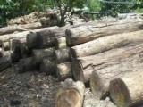 铁木豆原木进口在哪个口岸做进口清关比较好/商检查验具体流程