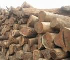 红铁木价格/旺添供红铁木价格/红铁木供应商报价