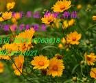 福建省花海专用草坪种子草种花种灌木种子批发
