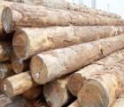加纳黑檀木材进口代理