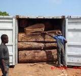 黄埔港木材专业进口|南美柚木进口审价