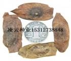 黄花梨种子多少钱一斤