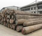 南美木材原木板材进口报关行|清关公司