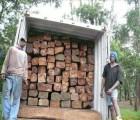 东莞沙田木材进口手续