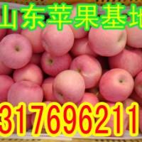 山东苹果价格红富士苹果批发